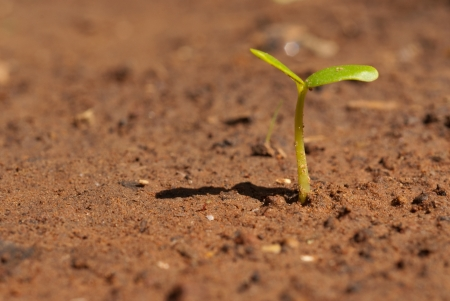 seed growing in the ground