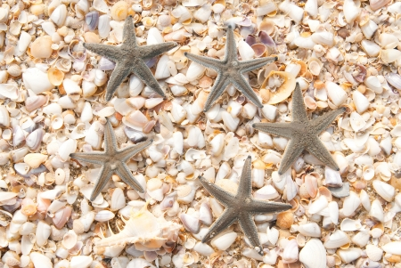 five star fish on the beach in thailand