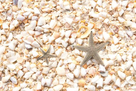 Two star fish on the beach in thailand