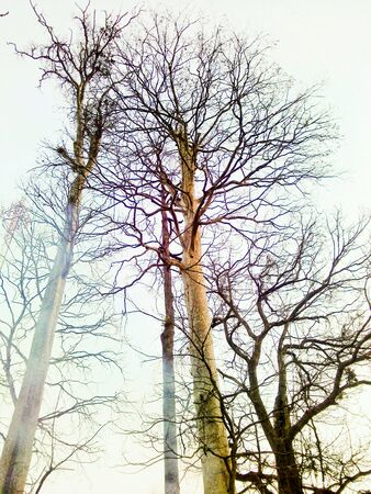 Stromy bez listí na podzim