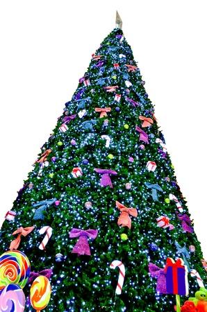 huge christmas tree: Giant pine trim