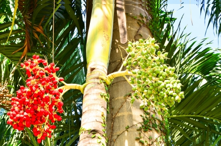 Palm kernel  Stock Photo - 16920518