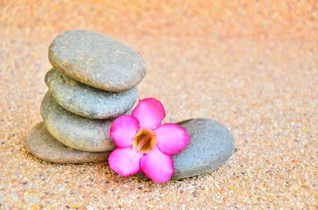 glowering: Desert Rose Flower Stock Photo