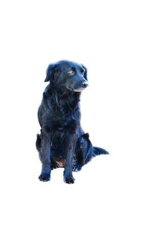 Black Dog  Stock Photo - 17235533