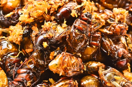 fried insects with garlic