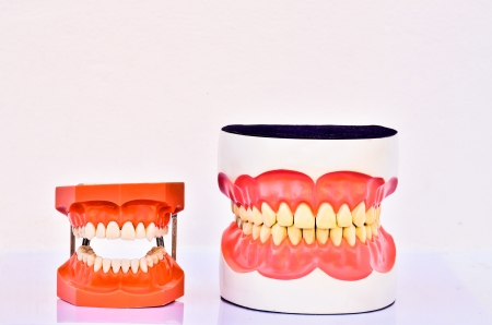 A pair of plastic human teeth models photo