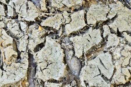 Dirty cracked earth photo