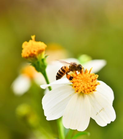 Swarm of bees Flowers