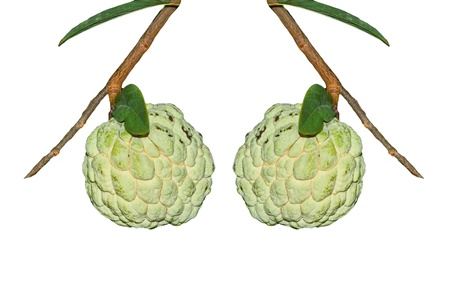 Custard apple fruit on white background photo