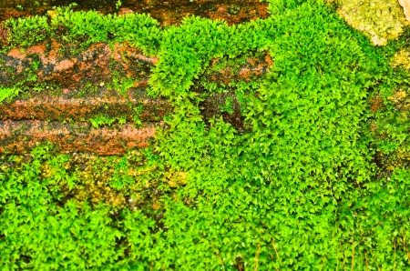 Green moss on wall photo