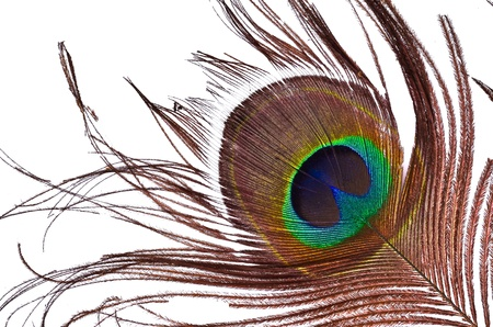 peacock feathers: peacock feathers Stock Photo