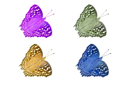 Multi colored butterfly photo