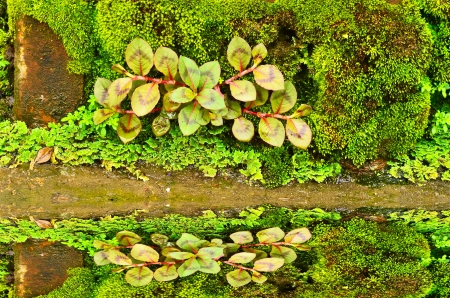 moss and reflection photo