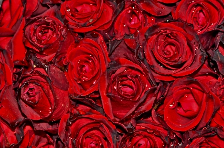 dark red with droplets Red natural roses background photo