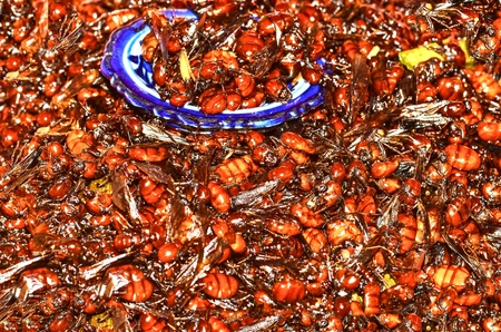 pismire: fired queen ant insect