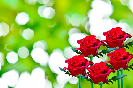 red rose bokeh: Beautiful red rose  on green bokeh