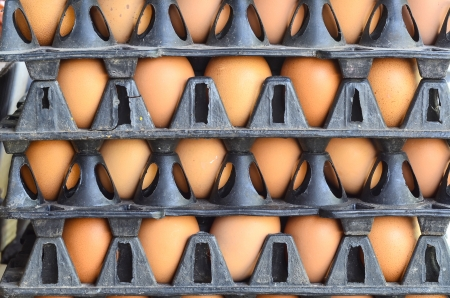 Fresh eggs in packaging stacked photo