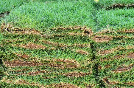 stacks of sod grass Stock Photo