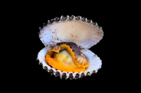 cockles: Steamed cockles