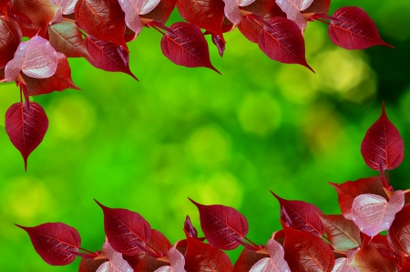 peepal tree: Red Pho leave buds on green nature bokeh Stock Photo