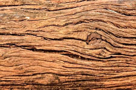gnarled: old gnarled tree log