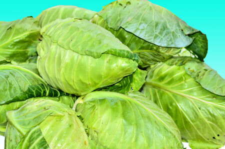Fresh cabbages on blue background