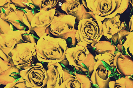 Vintage yellow roses background