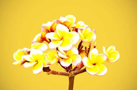 inflorescence: Beautiful yellow inflorescence