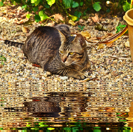 cat laying down near pond