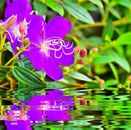lamiales: Purple flowers