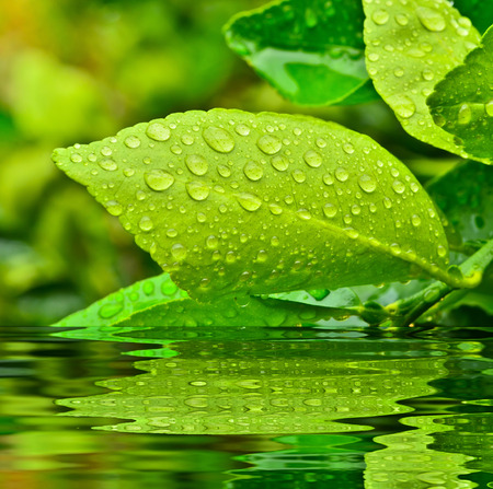 droplets on green leaf and reflect