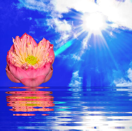 close up pink lotus on sun light with reflect in water photo