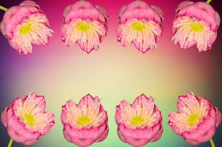 twain: Twain pink water lily flower on color light background