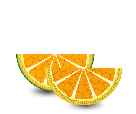 Citrus slices Illustration