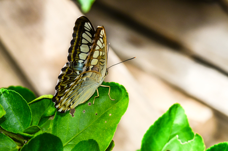 Butterfly on green leave photo