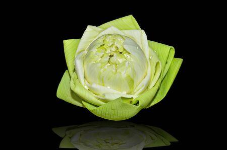 Lotus flower on black background Stock Photo