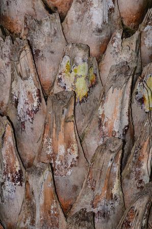 sheath: leaf sheath background texture Stock Photo