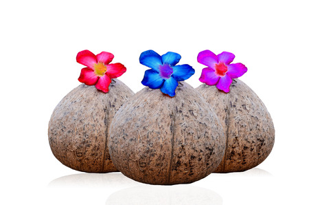 copra: Coconut shell and flower on white background