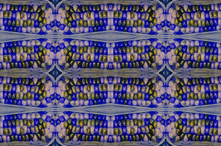 Close up blue color Boiled corn background