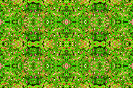 Beautiflu muti color leaves background