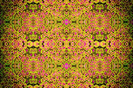 muti: Beautiflu muti color leaves background