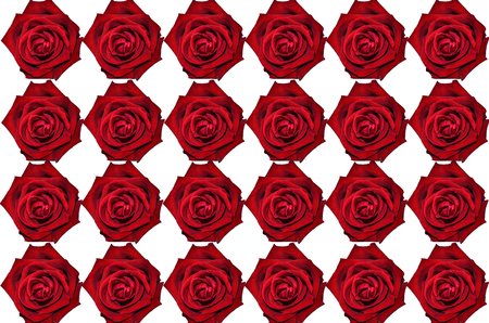 red wallpaper: Red rose  on white background wallpaper Stock Photo
