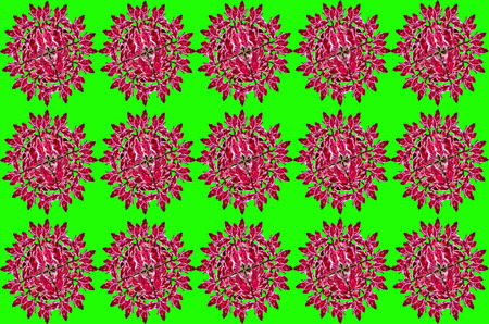 warts: Group Redbird Cactus background on green background Stock Photo