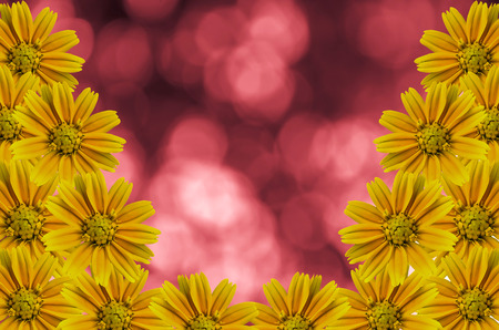 Beautyful Little Yellow Star flower on red nature background Stock Photo