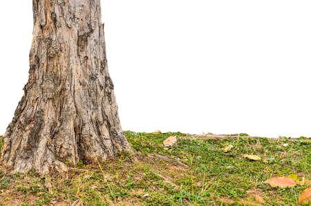 base: Base tree on white  background