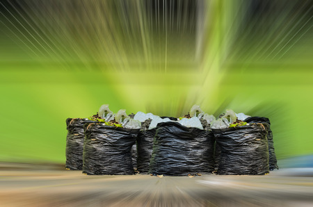 disposed: Many garbage and waiste in black bags on green motion background
