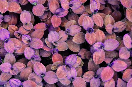 encroach: Violet leaves wall background