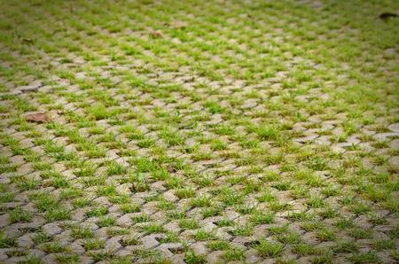 Pavimentos permeables en un cuadrado