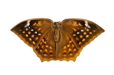 Butiful Brown butterfly Isolated on white background