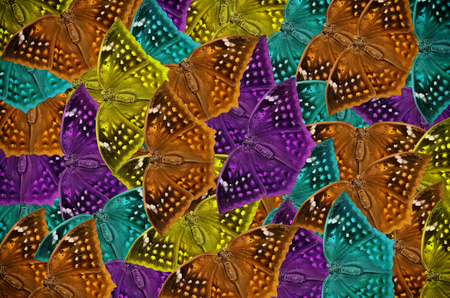 Many Beautiful color butterfly background